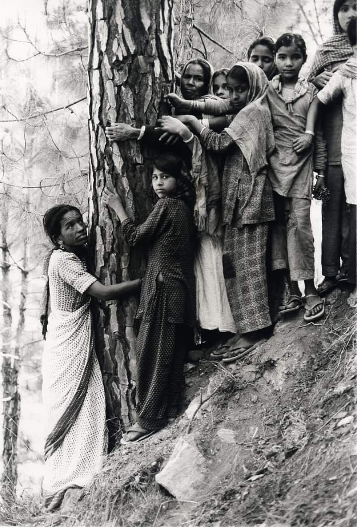 The first tree huggers were 294 men and 69 women.